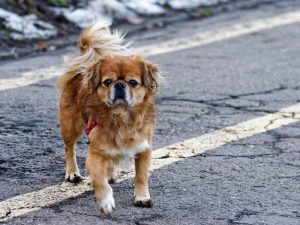 How Should You Treat Your Dog's Arthritis at Home?