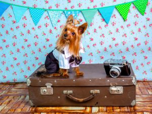 Pet Passport: Most-Asked Questions Answered