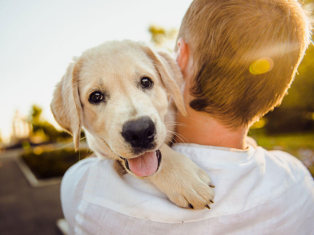 pets like dogs as probiotics to human