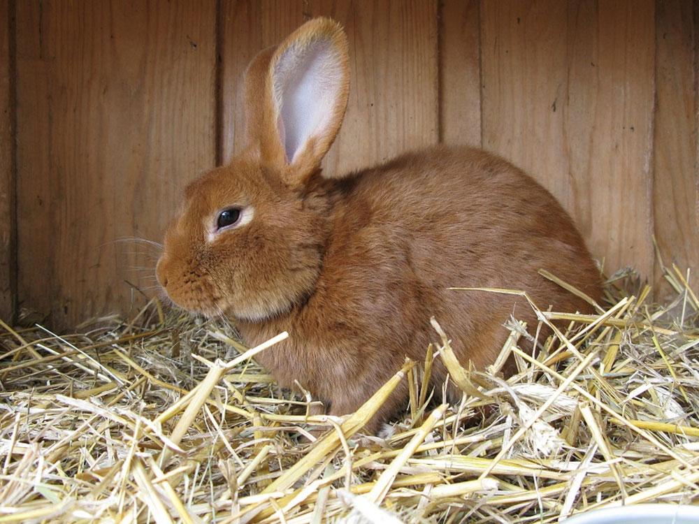 rabbit bedding