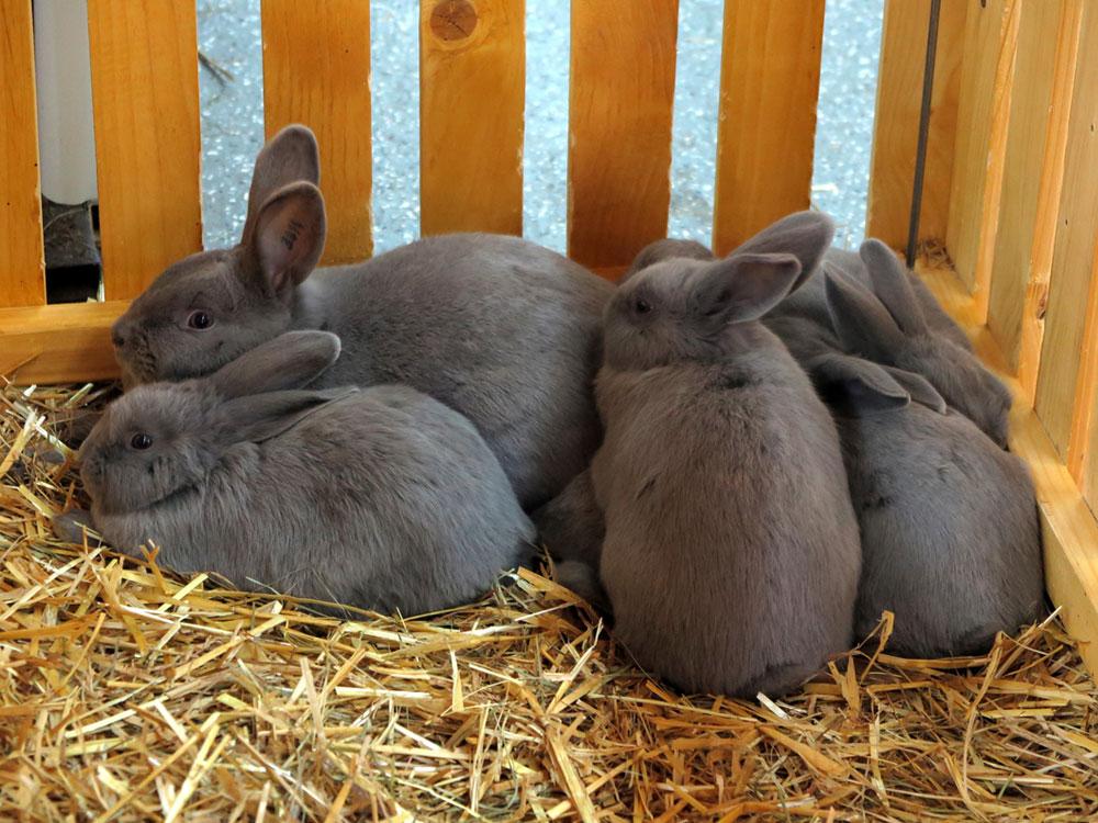 rabbit crate