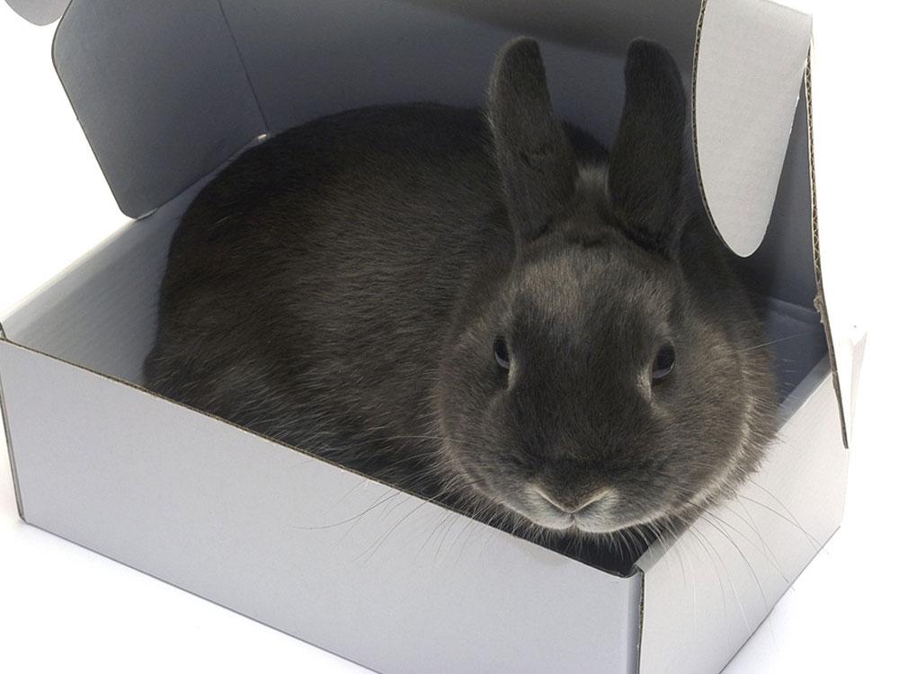 rabbit hiding place