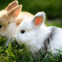 The 6 Most Loved Rabbit Breeds