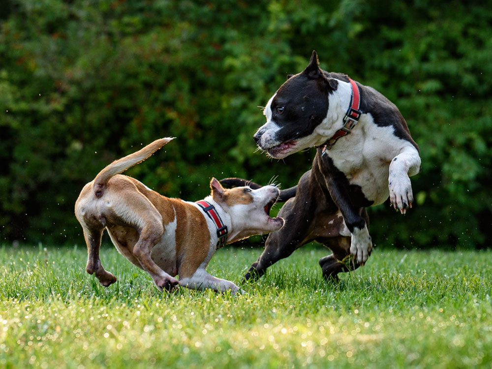 Stop a Dog Fight