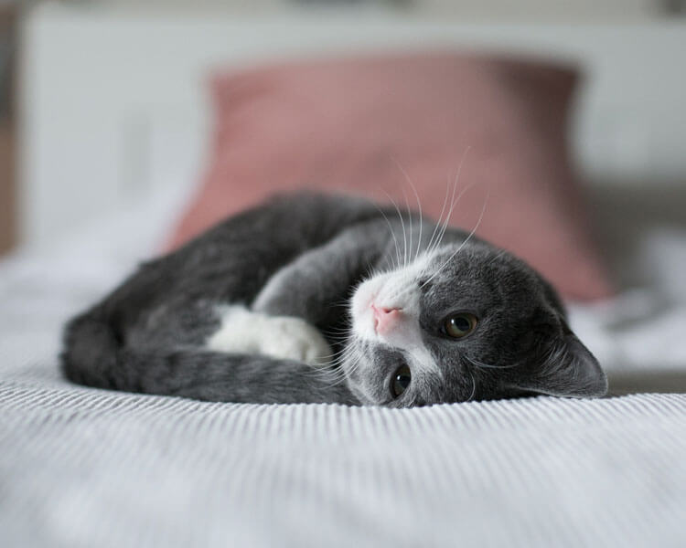 bored-cat-lying-in-bed
