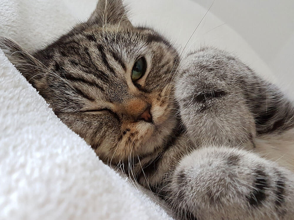 cat with hairball symptoms lying on a sofa