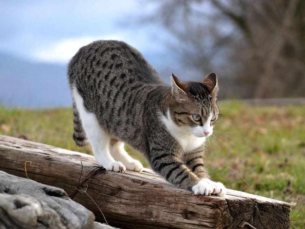 cat kneading on a log of wood