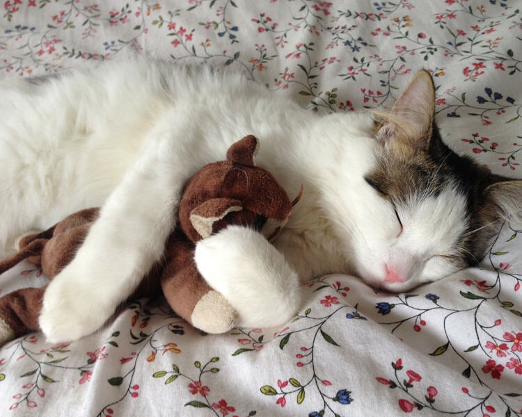 cat-sleeping-with-toy