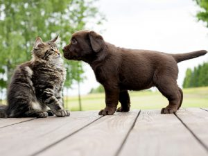 a-cat-and-puppy-facing-each-other