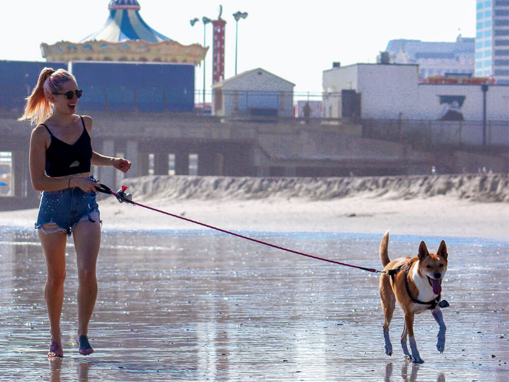 dog and owner at the beach