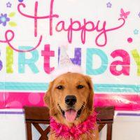 8 Awesome Dog Birthday Ideas