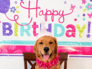 6 Awesome Ways to Celebrate Your Dog's Birthday