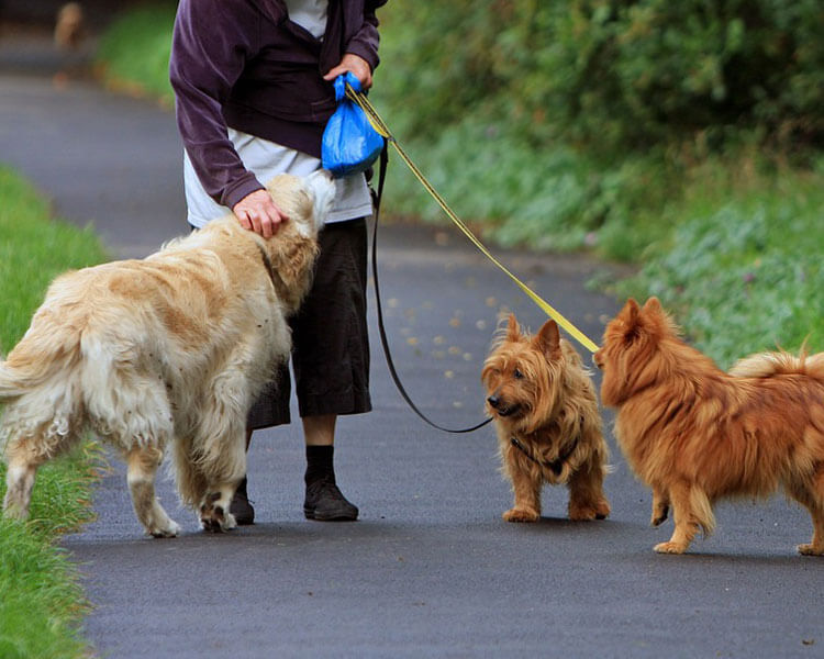 dogs walking outside with a woman