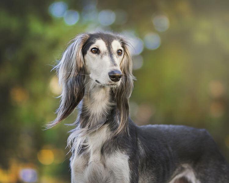 leave basset hound home alone