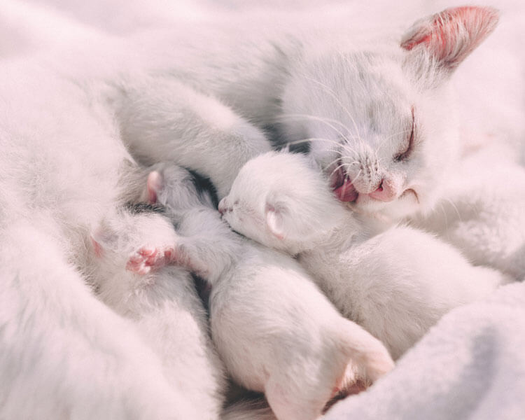 a mother cat with its litters
