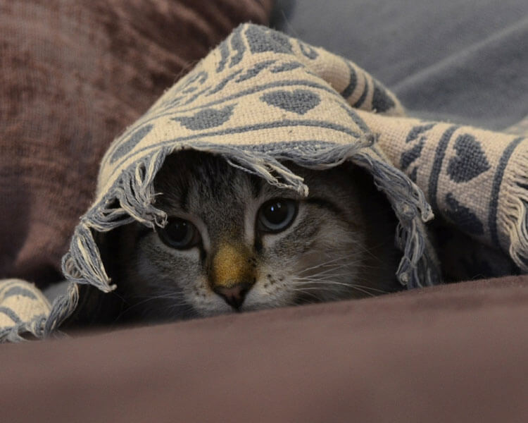 weak cat hiding in its place