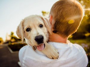 Answered: What Is the Best Dog Breed for Me?