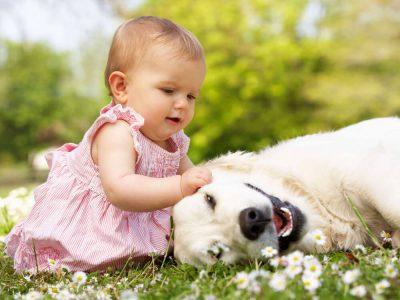 The 10 Best Dog Breeds for Kids