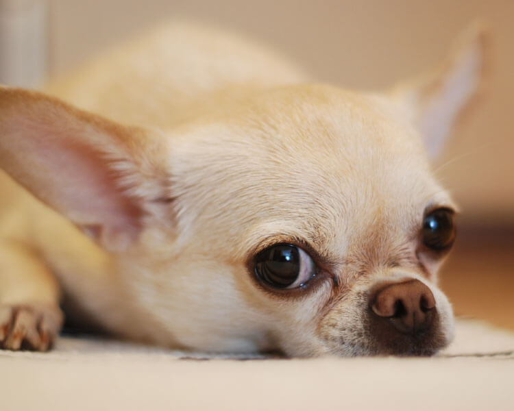a bored dog might lead to consume its own faeces