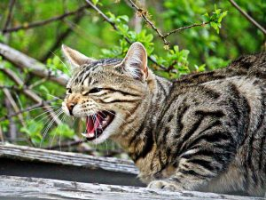 Why is my cat hissing? All your questions answered