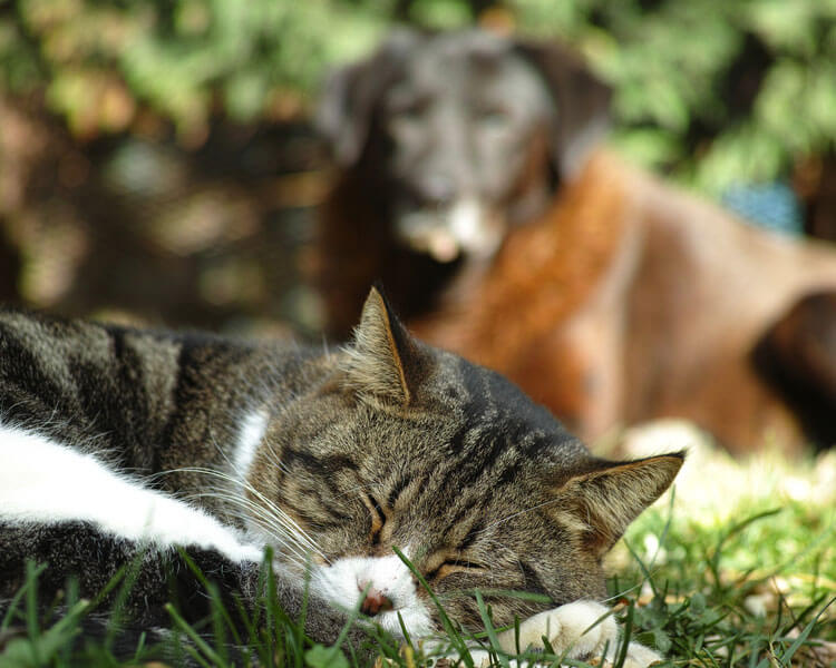 dog-eating-a-cats-poop