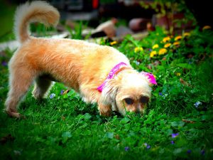 Why Do Dogs Eat Poop?: Answer and Solutions