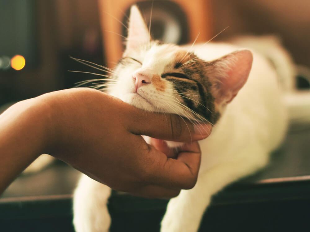 a cat being affectionate when biting a human hand