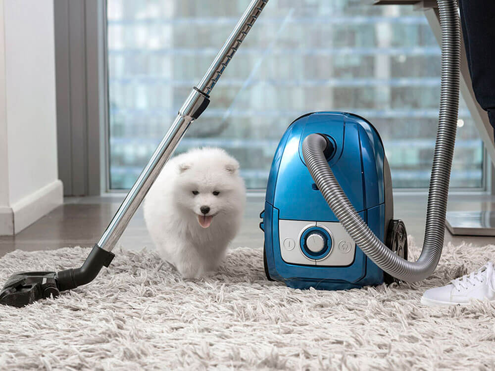 vacuuming the carpet with dog odour