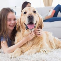 The Top 6 Cuddliest Dogs in the World