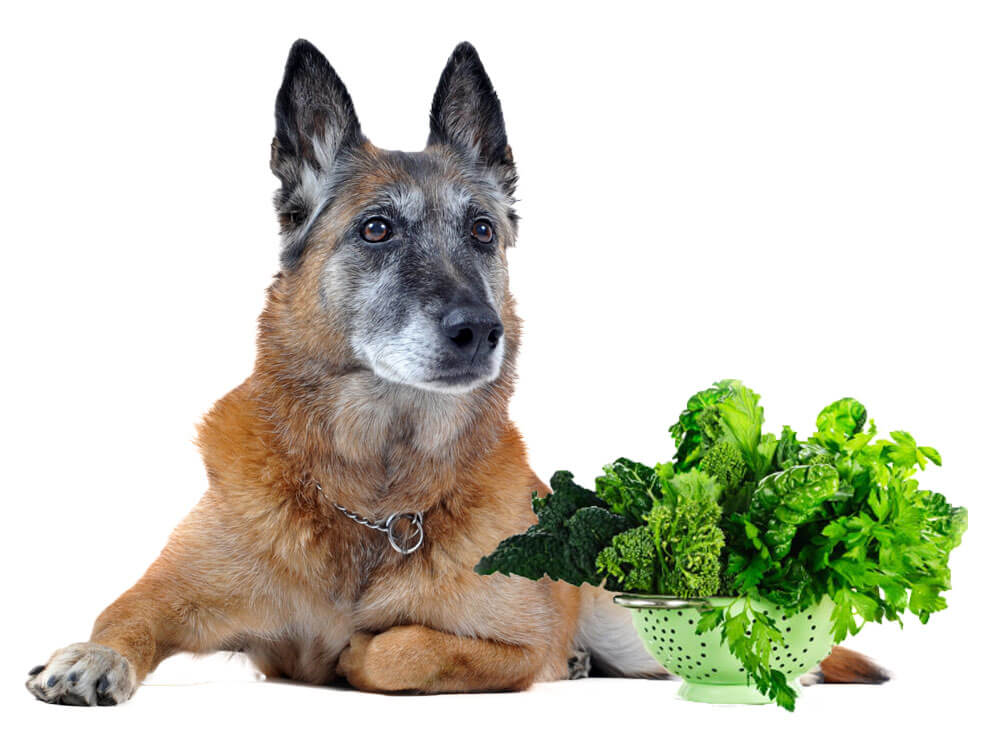 leafy vegetables for dog with constipation