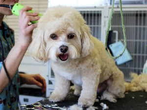 Dog Grooming – Should You Do It Yourself?