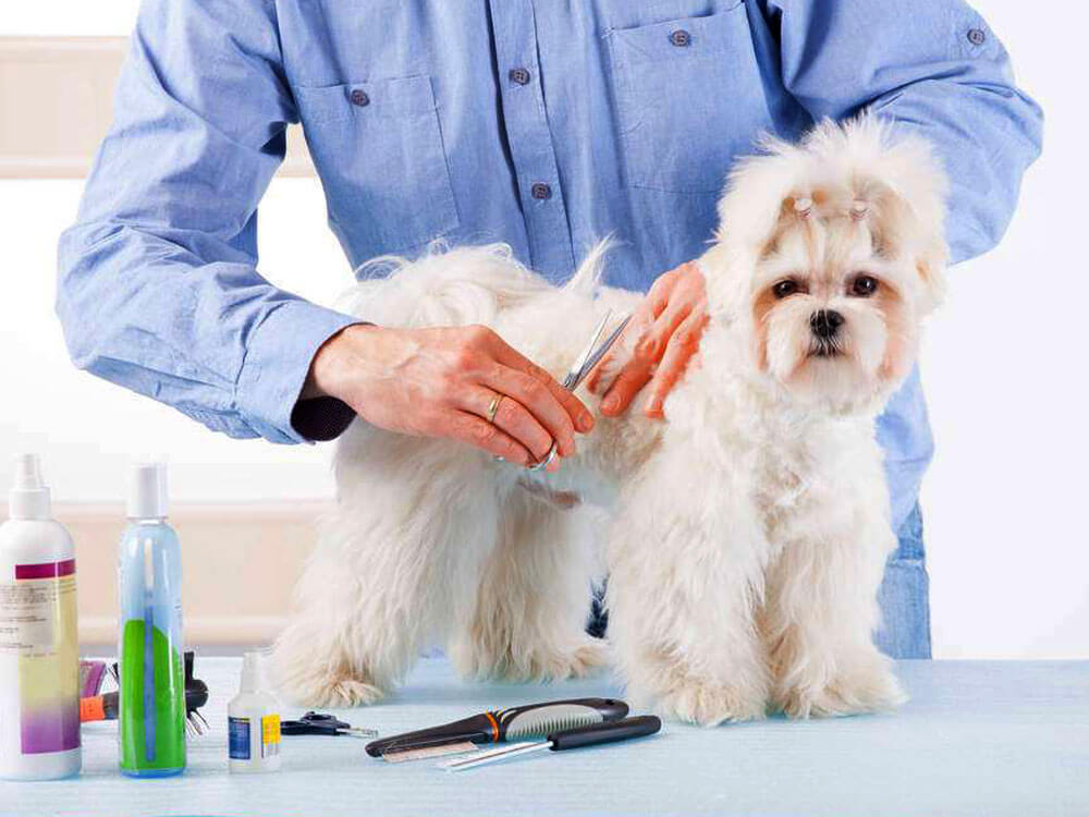 groomer cutting the dog's fur