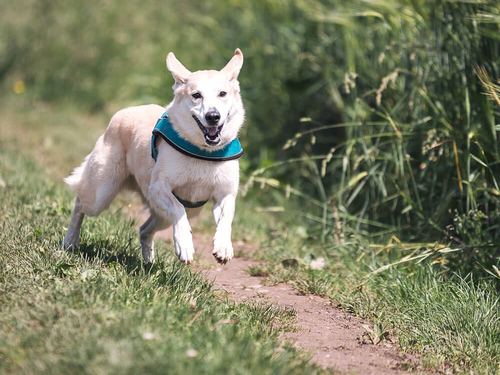 proper exercise to prevent dog constipation