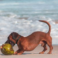 Can Dogs Eat Coconut? If So, What Are the Benefits?
