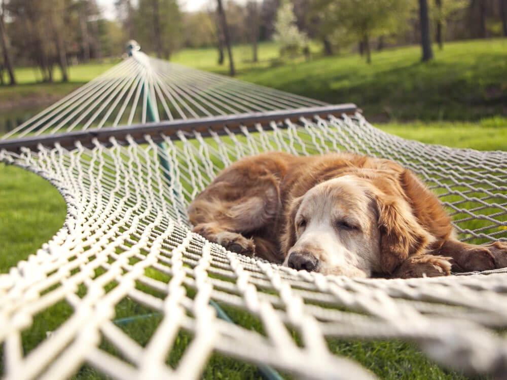 a dog with dandruff sleeping on a swing
