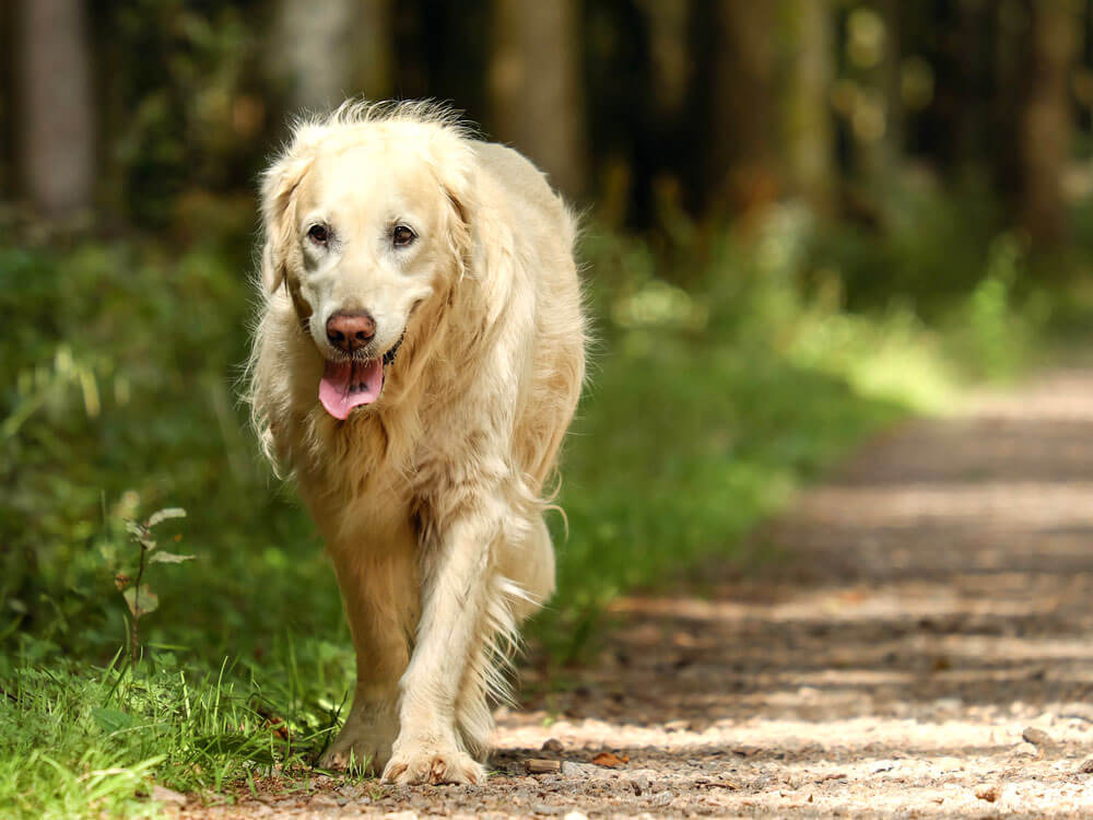 accompanying a dog on its golden years