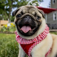 9 Best Small Dogs for Kids