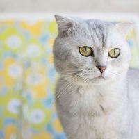 The Top 5 Smartest Cat Breeds