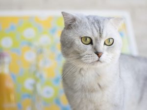 The Top 5 Smartest Cat Breeds