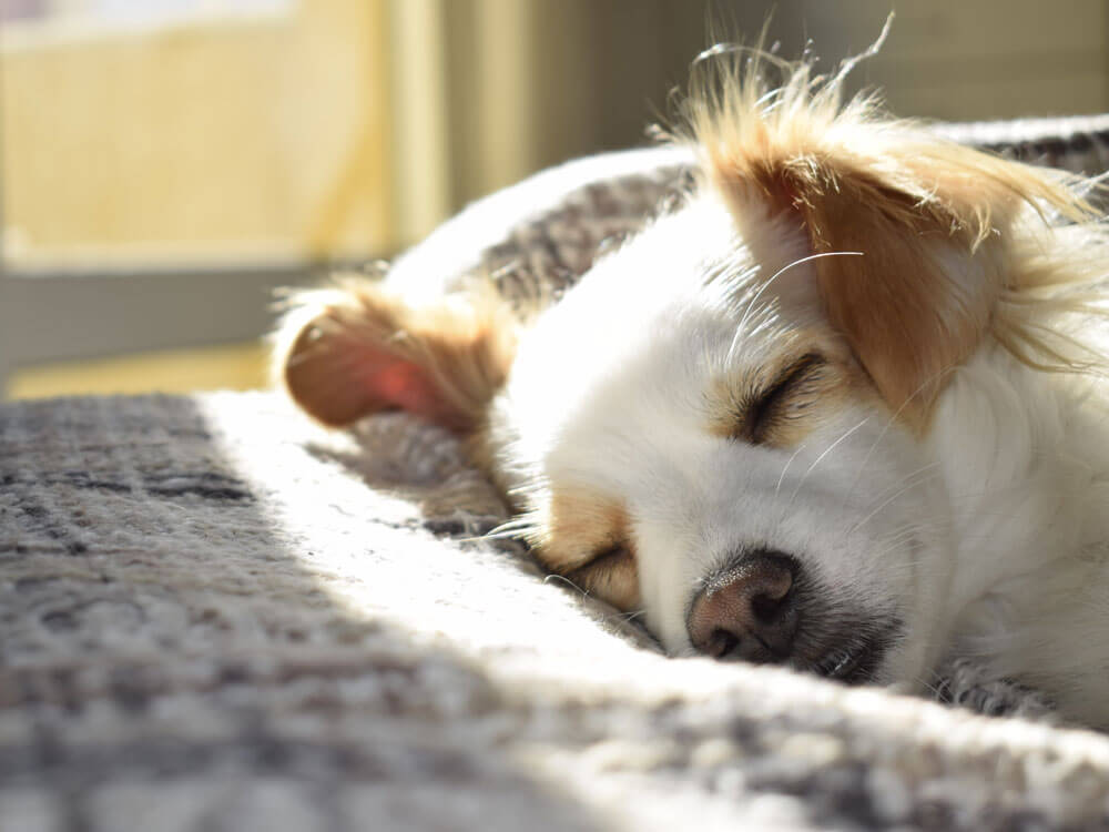 a stress dog sleeping due to having constipation