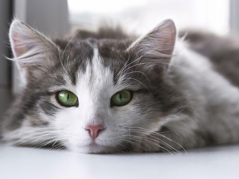 a cat lying on the floor