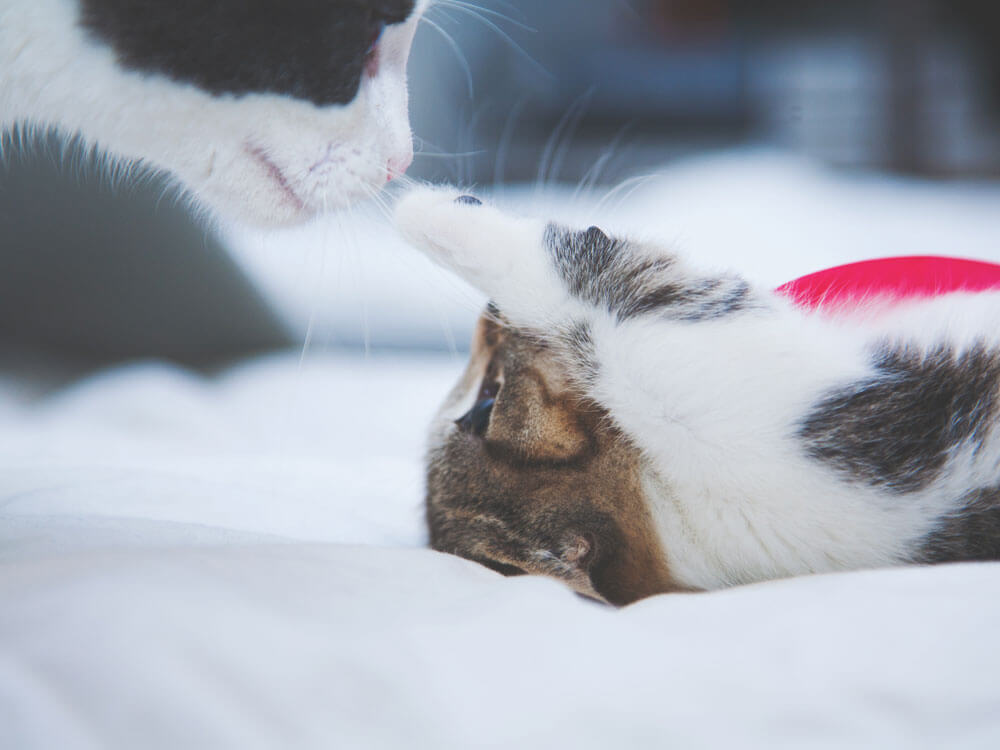 A cat together with a playful kitten