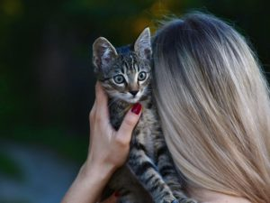 Should You Adopt a Kitten or a Cat?
