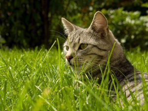 Why Do Cats Eat Grass? Should I Stop Her?