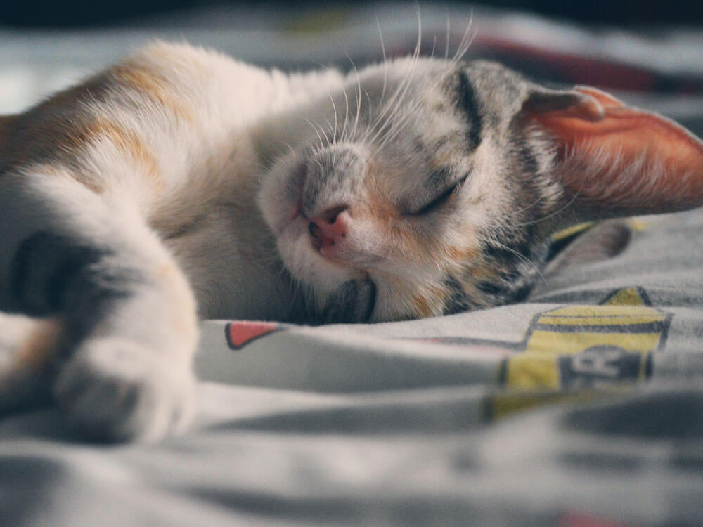 A cat sleeping soundly in a bed