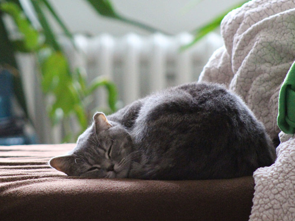 a cat sleeping in a clean bed