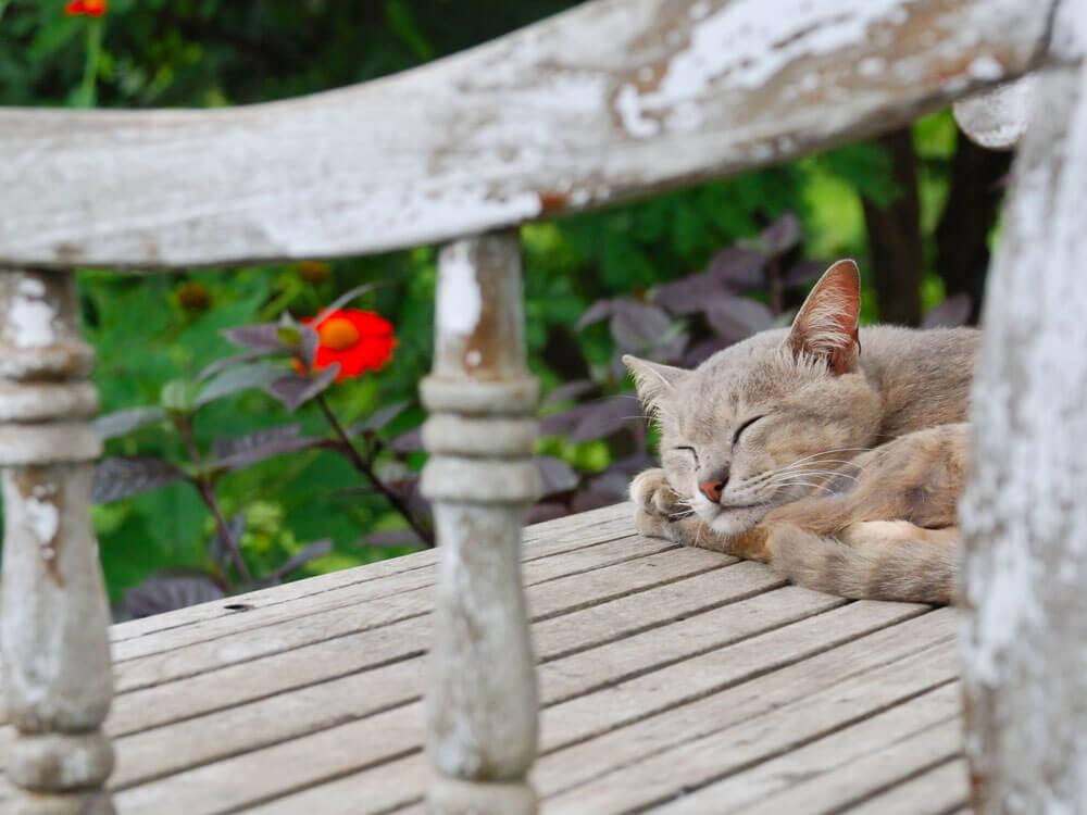 outdoor cat eating grass