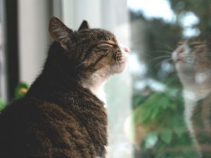 Cat Sneezing: Causes and Treatments