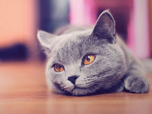Blood in Cat Poop – Should I Worry?
