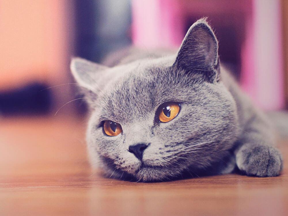a sick cat lying on the floor